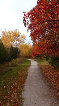 Autumn, Fall, Path, Nature, Leaves, Forest, Tree