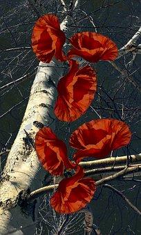 Birch, Poppy, Nature, Flower