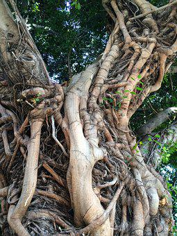 Wuzelbaum, Tree Roots, Root, Nature, Tree, Wood, Forest