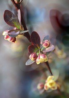 Sprig, Flowers, Small, The Buds, Garden, Foliage