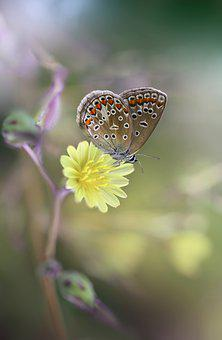 Butterfly, Insect, Flower, Yellow, Meadow, Grasshopper