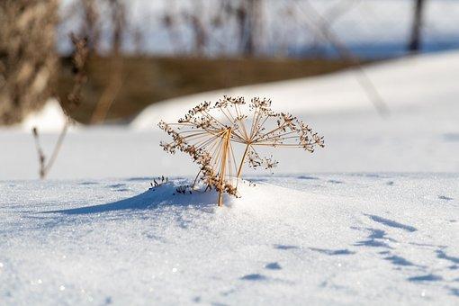 Winter, Snow, Landscape, Nature, Background