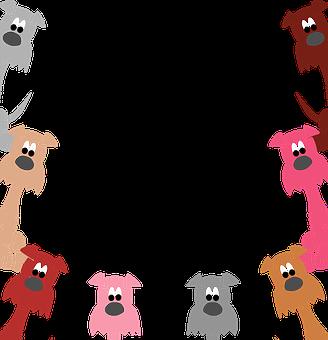 Dog, Pet, Border, Snout, Muzzle, Head, Animal, Mammal
