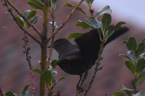 Bird, Merlette, Merle, Female, Nature, Plumage, Garden