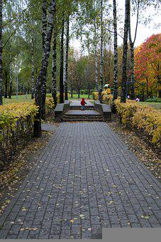 The Park, Autumn, Birch, Trees, Nature