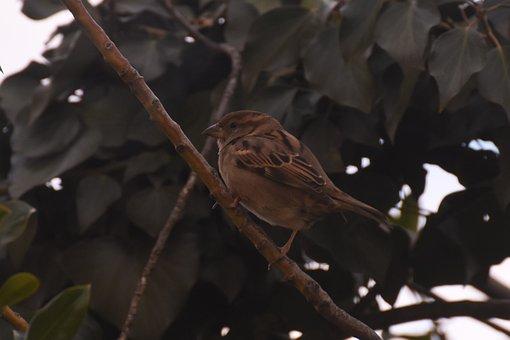 Bird, Sparrow, Nature, Plumage, Garden, Fauna