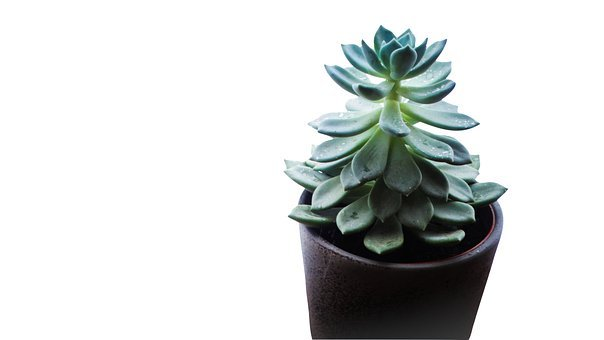 Succulent, Plant, Pot, Potted, Potted Plant, Plant Pot