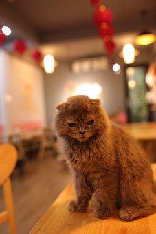 Cat, Eyes, Animal, Portrait, Kitten, Cute, Look, Mammal