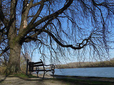 Waterfront, Danube, Water, River, Avenue, Pad, Chestnut