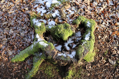 Stump, Old, Moss, Forest, Wood, Tree, Green, Root