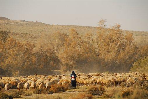 Sheep, Shepherd, Farm, Herd, Flock, Animals, Mammals