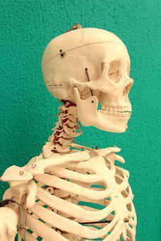 Skull, Skulls, Medicine, Death, Skeleton, Horror, Head