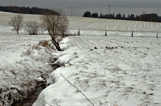 Torrent, Tree Free Standing, Snow, Water, Frozen