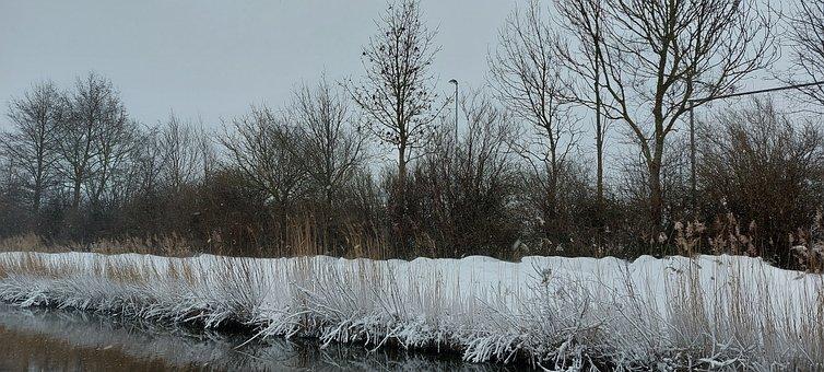 Snow, Forest, Waterworks Dunes, Winter, Trees