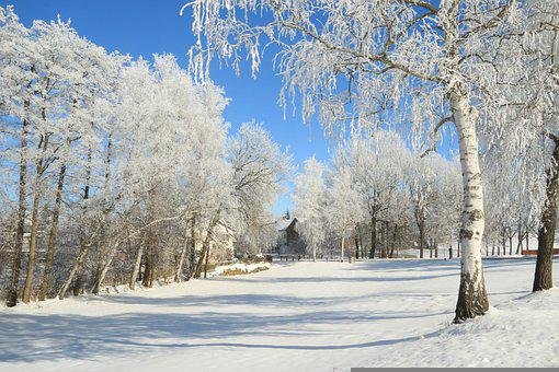 Winter, Cold, Frost, Winter Forest, Siberia, Snow, Ice