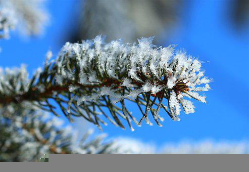 Wintry, Frost, Macro Photography, Snow Landscape, Ice