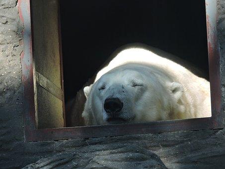 Polar Bear, Zoo, The Prague Zoo, Animal, Rest