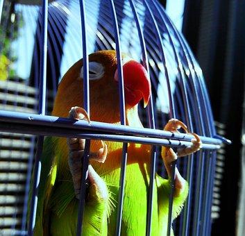 Lovebird, Green, Bird, Parrot, Tropical, Small, Love