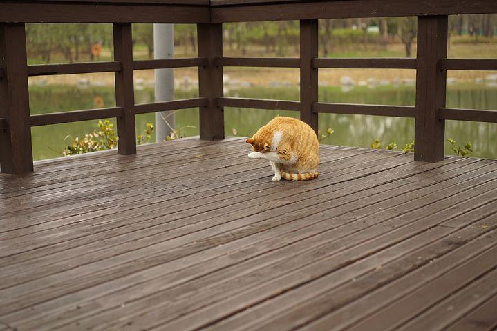 Park, Overcast, Cat, Deck, Tax Revenues, Fur Trim