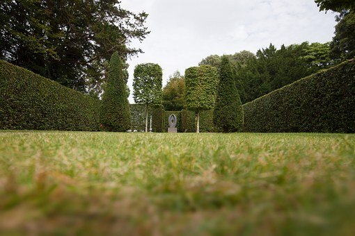 Park, Hedge, Garden, Trees, Trimmed, Cut, Symmetry