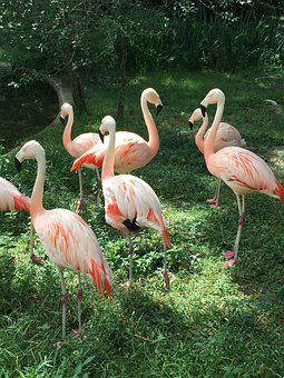 Pink, Flamingo, Green, Grass, Zoo, Trees, Animal