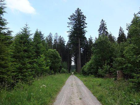 Hiking, Route, Path, Lane, Track, Adventure, Wood