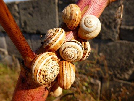 Snail Shells, Snails, Close Up, Branch, Animals, Nature