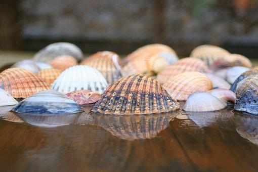 Shells, Sea, Ocean, Nature, Sea Shell, Seashell, Beach