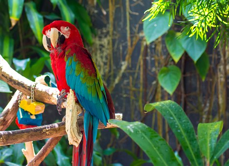 Parrots, Bird, Animal, Macaw, Colourful, Color