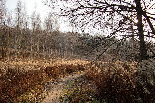 The Path, Landscape, Autumn, Tree, Nature, Way, Spacer