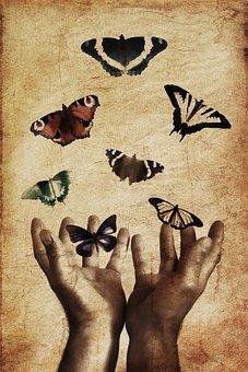 Butterflies, Hands, Butterfly, Nature, Insect, Summer