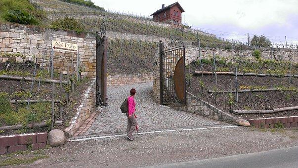 Naumburg, Saale Unstrut, Wine, Wine Hike, Bottle