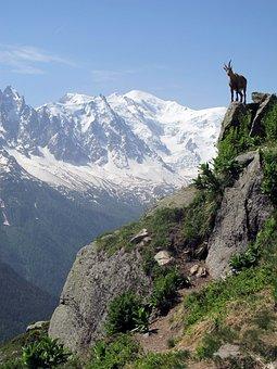Mont Blanc, Ibex, Alps