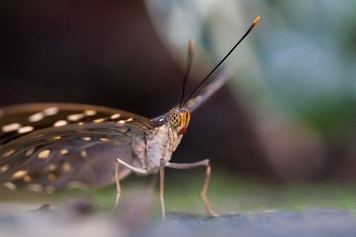 Animal World, Butterfly, Macro, Nature