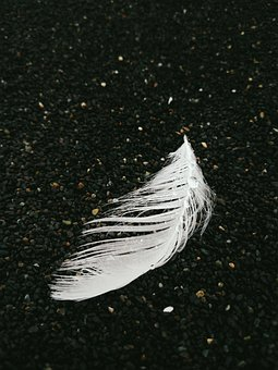 Background, Beach, Black Sand, White Feather, Contrast
