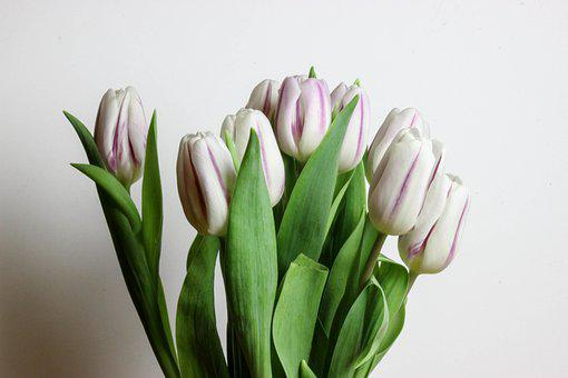 Flowers, Tulips, Tulip, Garden, Spring, Bloom, Blossom