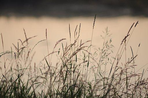 Blade Of Grass, Grass, Nature, Water, Grasses, Bokeh