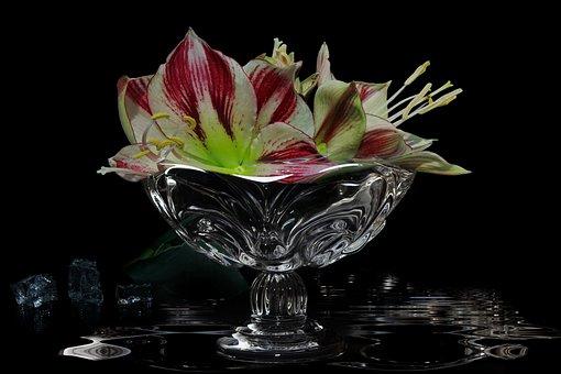 Glass Bowl, Broken Glass, Amaryllis, Knights Star