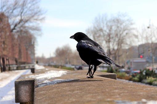 Raven, Corneille, Bird, Black Color, Balcony, Pierre