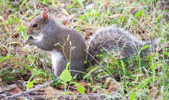 Animal, Squirrel, Spring, Cute, Nature