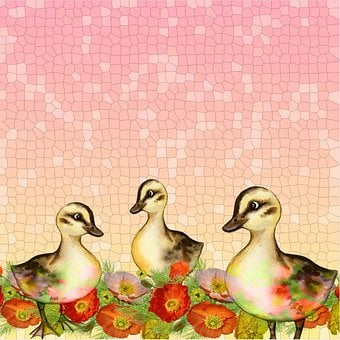 Ducklings, Ducks, Background, Poppies, Spring, Flowers