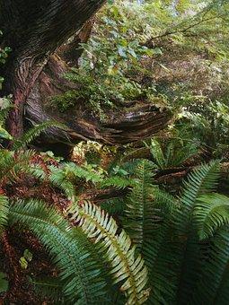 Beautiful, Dark, Ferns, Fine Art, Foliage, Forest