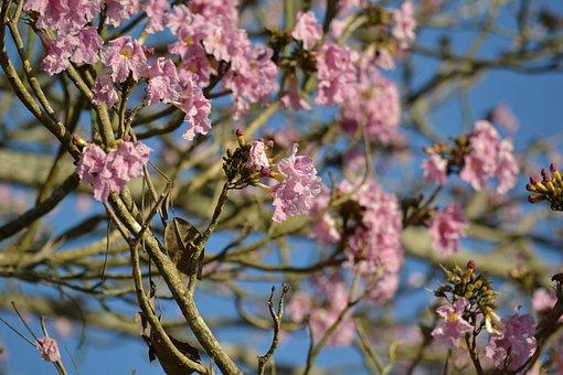 Flower Flowers, Pink, Nature, Wood, Tree Trees, Flower