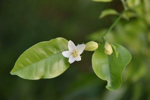 Wild Flower, Pointed Lower, Flower, White, Purple