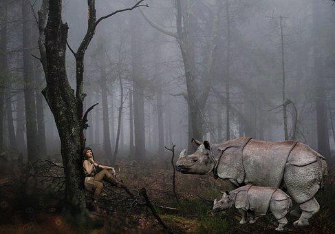 Forest, Danger, Animals, Rhino, Mammal, Wild Animal