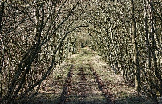 Skovvej, Path, Trees, Natural, Forest, Wood, Road, Krat