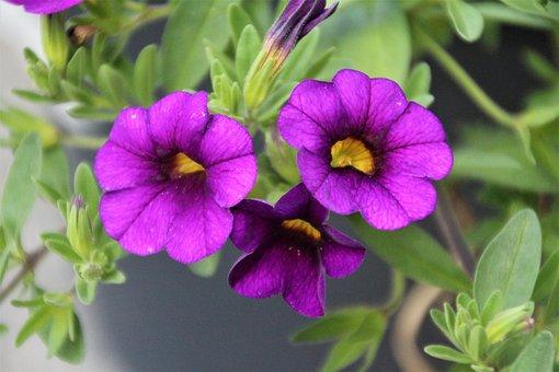 Flourish, Summer, Plant, Garden, Nature, Spring, Park