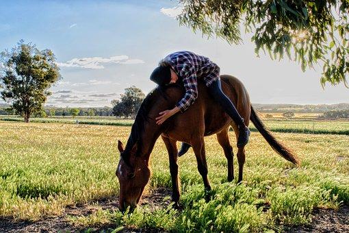 Horse, Pasture, Paddock, Friend, Animal, Nature, Equine