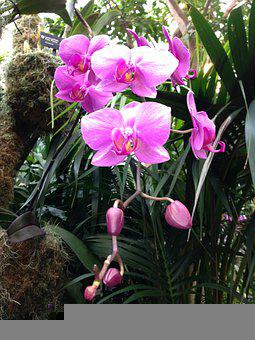 Hot Pink Orchids, Orchid Blossoms, Pink Orchid