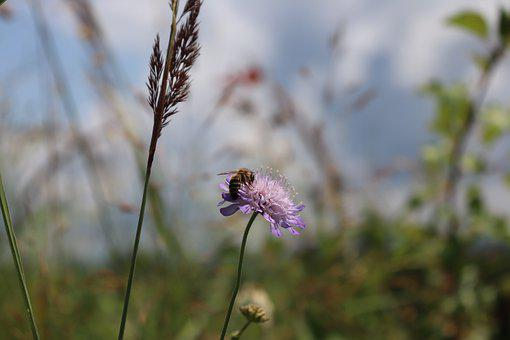 Bee, Honey, Flower, Forest, Grass, Insect